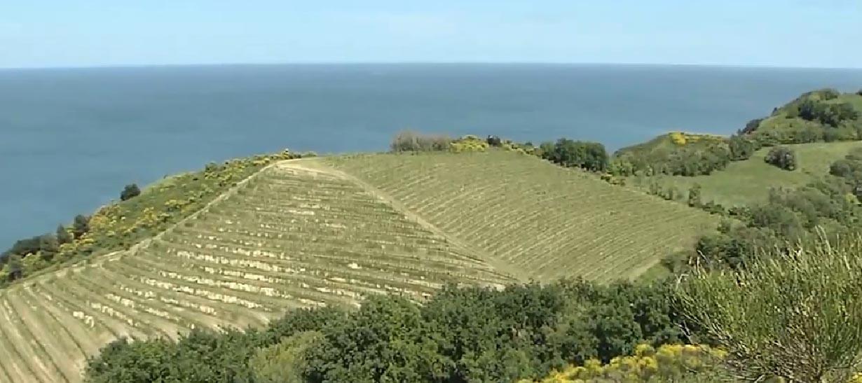 Vista dal Monte San Bartolo